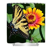 Snacking Tiger Swallowtail Butterfly Shower Curtain