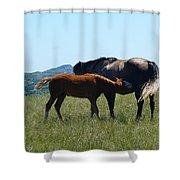 Snacktime Shower Curtain
