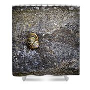 Snail At Ballybeg Priory County Cork Ireland Shower Curtain