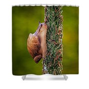 Snail Climbing The Tall Grass Shower Curtain