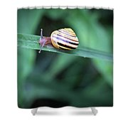 Snail In His Green Jungle Shower Curtain