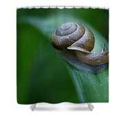 Snail In The Morning Shower Curtain