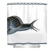 Snail Mail Shower Curtain