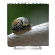 Snail On Rock Shower Curtain