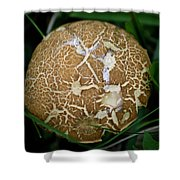 Snail Trails Squared Shower Curtain