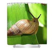 Snail Work B Shower Curtain