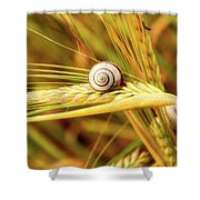 Snails On Wheat Shower Curtain