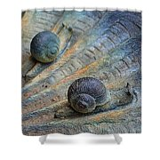 Snail's Pace Shower Curtain