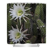 Snake Cactus Flowers Shower Curtain