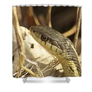 Snake Eye Shower Curtain