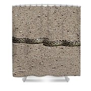 Snake On The Road Shower Curtain