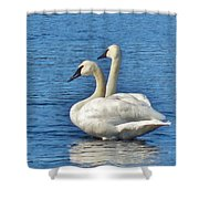 Snake River Swans Shower Curtain