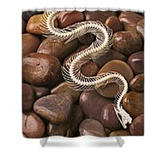 Snake Skeleton  Shower Curtain by Garry Gay