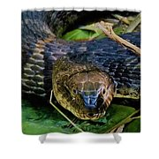 Snakehead Shower Curtain