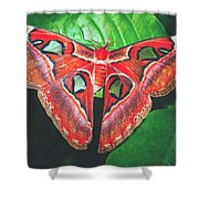 Snakehead Moth Shower Curtain