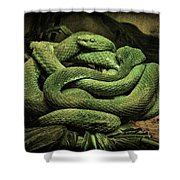 Snakes Alive Shower Curtain