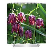 Snakes Head Flowers Shower Curtain
