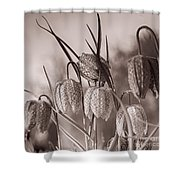 Snake's Head Fritillary  Shower Curtain