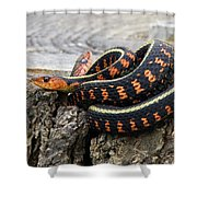 Snakes On A Stump Shower Curtain
