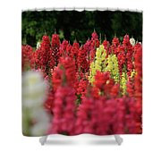 Snap Dragon Flowers Shower Curtain by Tracy Hall