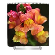 Snapdragon Flowers Shower Curtain