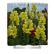 Snapdragons Flowers 3 Shower Curtain