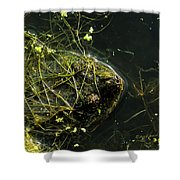 Snapping Turtle Head Shower Curtain