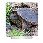 Snapping Turtle Laying Eggs Shower Curtain