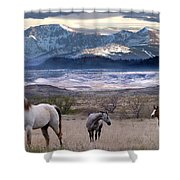 Snapshot Shower Curtain