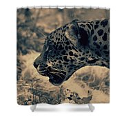 Snarl 2 Shower Curtain