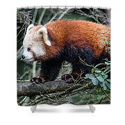 Sneaky Red Panda Shower Curtain