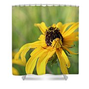Sneaky Spider Shower Curtain