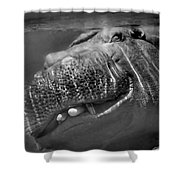 Sneaky Underwater Hippo Grin Shower Curtain