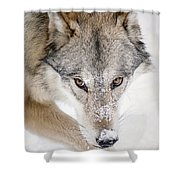 Sneaky Wolf Shower Curtain