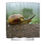 Sneal Shower Curtain