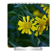 Sneezeweed Shower Curtain