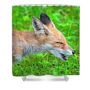 Sneezing Fox Shower Curtain by Fabrizio Troiani