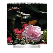 Sniff - Tea Rose Shower Curtain