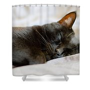 Snoozy Kitty Shower Curtain