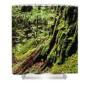 Snoqualmie National Forest Shower Curtain