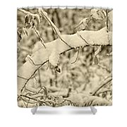 Snow Arch Shower Curtain