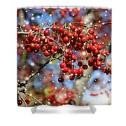 Snow Berries Shower Curtain