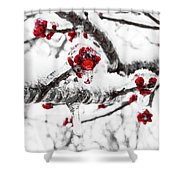 Snow Berry Shower Curtain