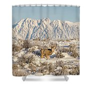 Snow-buck In Wyoming Shower Curtain