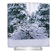 Snow Burdened Tree In The Flatirons Shower Curtain