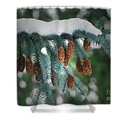 Snow Cones Shower Curtain