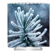 Snow Cover Pine Shower Curtain