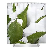 Snow Covered Agave Shower Curtain