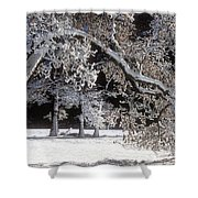 Snow Covered Black Oak Yosemite National Park Shower Curtain