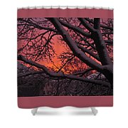 Snow Covered Branches At Sunset Shower Curtain
